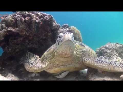 Documentary - Green Turtles of the Celebes Sea