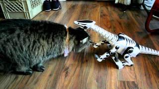 Cats meet RoboRaptor