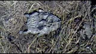 Маска дьявола в реальности!!! смотреть всем!(4.04.2012 маска черта из железа, после того как взяли её в руки долго не могли отмыть их от земли... что то не оъясн..., 2012-04-07T14:52:55.000Z)