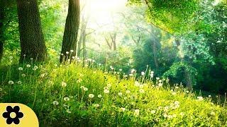 Música de Meditação Cura, Música relaxante de meditação, Yoga, Batimentos binaurais, ✿3243C