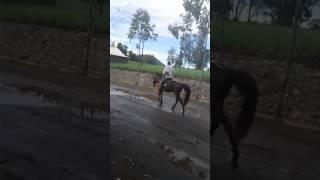 Video #naik kuda bromo tengger download MP3, 3GP, MP4, WEBM, AVI, FLV Desember 2017