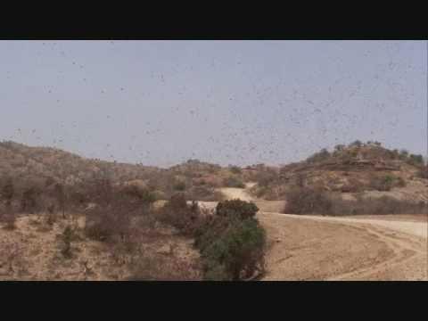 BIBLICAL PLAGUE OF LOCUSTS - YouTube