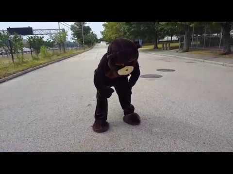 Thirsty Beaver Football Video