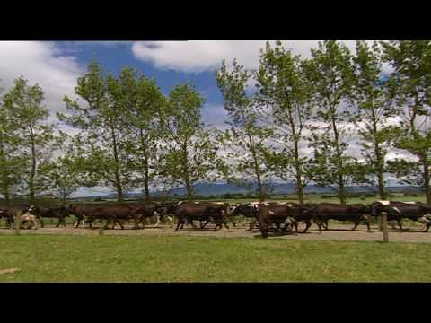 Drumlea Farm - Waikato Dairy Farm, New Zealand SOLD