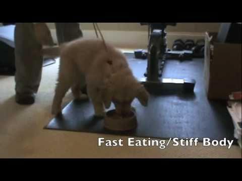 Food Aggression Rehabilitation