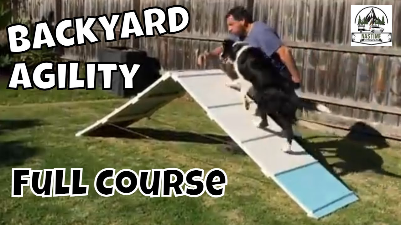 Merveilleux Pepeu0027s 1st Back Yard Dog Agility Trial 2015   Border Collie