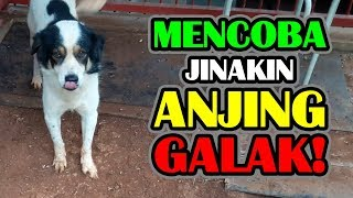 Cara Menjinakan Anjing Galak How to Tame a Fierce Dog
