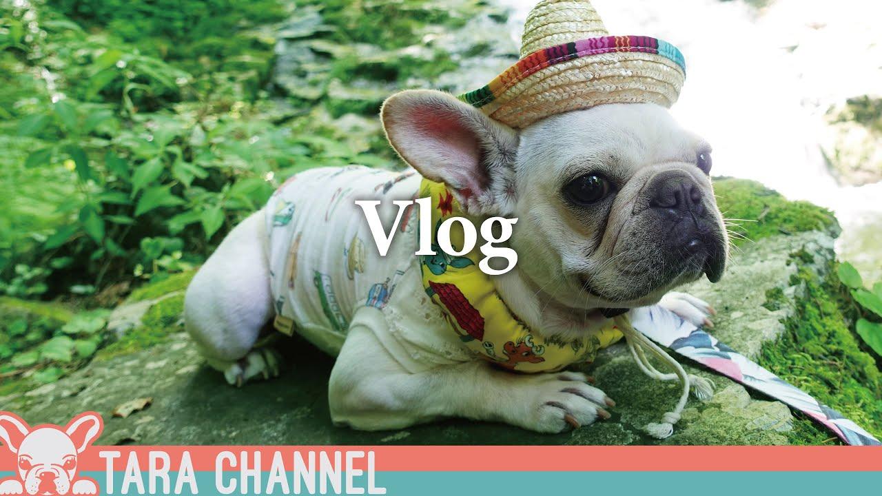 【愛犬と行く旅】夏でも激寒避暑地と犬OKの流しそうめんが最高だったw/vlog/阿弥陀ヶ滝【フレンチブルドッグ】