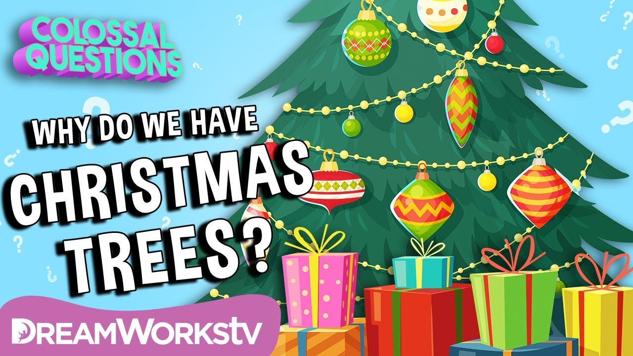 Why Do We Have Christmas Trees? | COLOSSAL QUESTIONS - YouTube