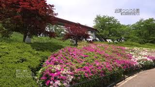 [富山]高岡水道つつじ公園[UHD4K顔声曲無] - Takaoka Water Azalea park