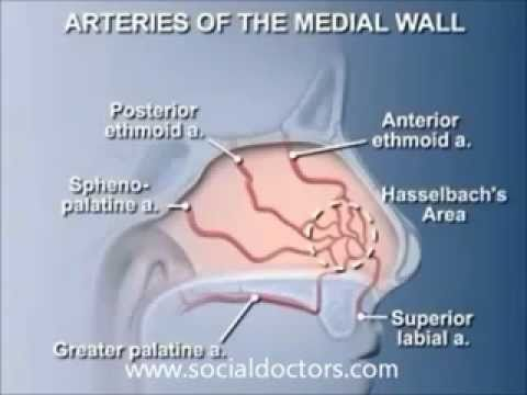 nasal anatomi