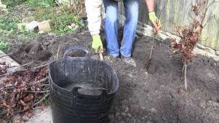 How To Plant A Bare Root Hedge | Advice From Best4hedging