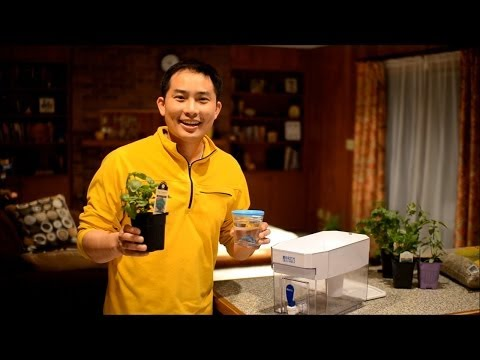 How to Re-purpose a Brita into an Aquaponics System