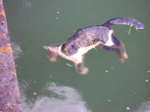 Encuentran gato asesinado en una acequia de Alfaix