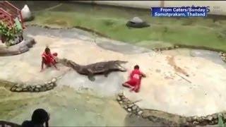 Crocodile bites down onto trainer