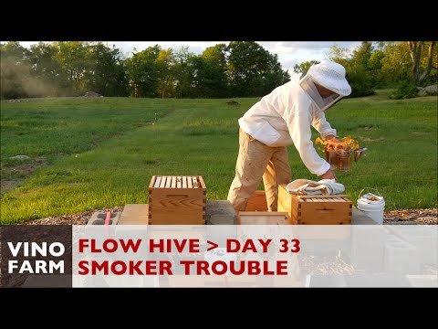 Flow Hive – Comb Surgery – Day 33 – Novice Beekeeping