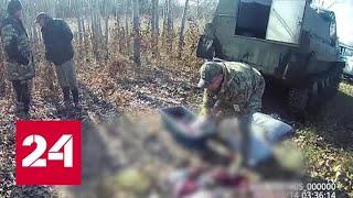 Как саранча: банда приморских браконьеров уничтожала все живое - Россия 24