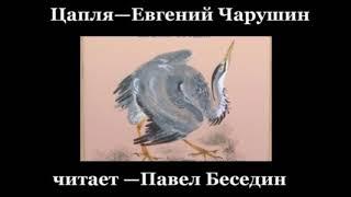 """""""Цапля""""—  Евгений Чарушин— читает Павел Беседин"""