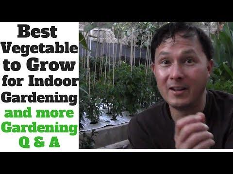 Best Vegetable to Grow for Indoor Gardening & More Organic Gardening Q&A