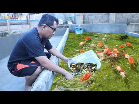 UNTOLD Secrets And Tips Behind Fish Keeping & Fish Breeding