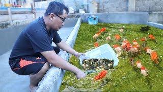UNTOLD secrets and tips behind fish keeping & fish breeding
