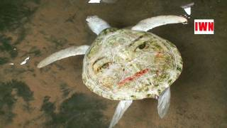 MICHAEL JACKSON REBORN AS SEA TURTLE