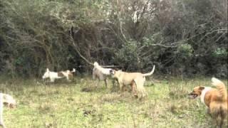 caza de jabali en rivera uruguay.rs