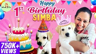 First Birthday Celebration of SIMBA | #HBDSimba | Wow Life