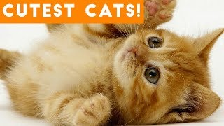 Download Ultimate Cute and Funny Cat Compilation 2018   Funny Pet Videos Mp3 and Videos