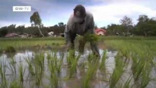 Klimafreundlicher Reisanbau auf den Philippinen | Global Ideas