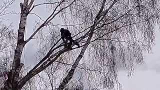 Валка сложных деревьев Санкт- Петербург и Лен. область.(http://valkaderevyev.org/ Удаление сложных деревьев, кронирование,санитарная обрезка, дробление пней, валка деревьев..., 2013-01-16T18:18:03.000Z)