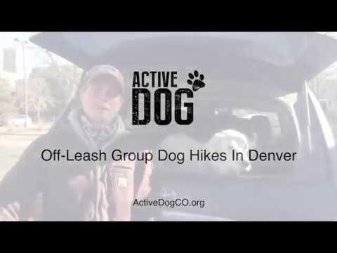Off-Leash Dog Hikes in Denver   Active Dog Colorado
