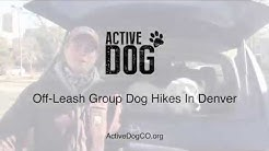 Off-Leash Dog Hikes in Denver | Active Dog Colorado