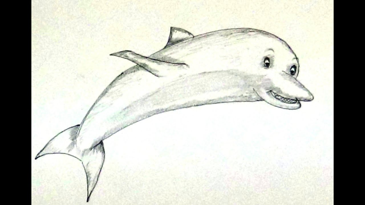 How to draw dolphin dolphin drawing pencil work step by step