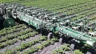Rolnictwo Precyzyjne - GARFORD Celery Hoe + Trimble