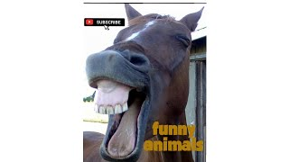 Funny animals fails and wins #part 1#