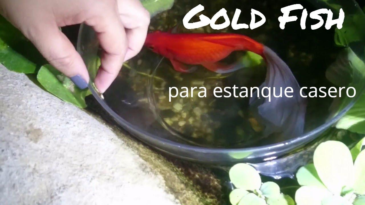 Pez goldfish para estanque casero de peces koi de victoria for Estanque de peces casero