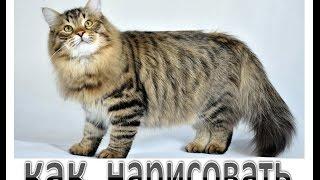 Как нарисовать Кота #draw, як намалювати кота #2(Как нарисовать Кота #draw, як намалювати кота Кот – интересное существо. Он гуляет сам по себе. Как нарисовать..., 2016-08-23T13:30:00.000Z)