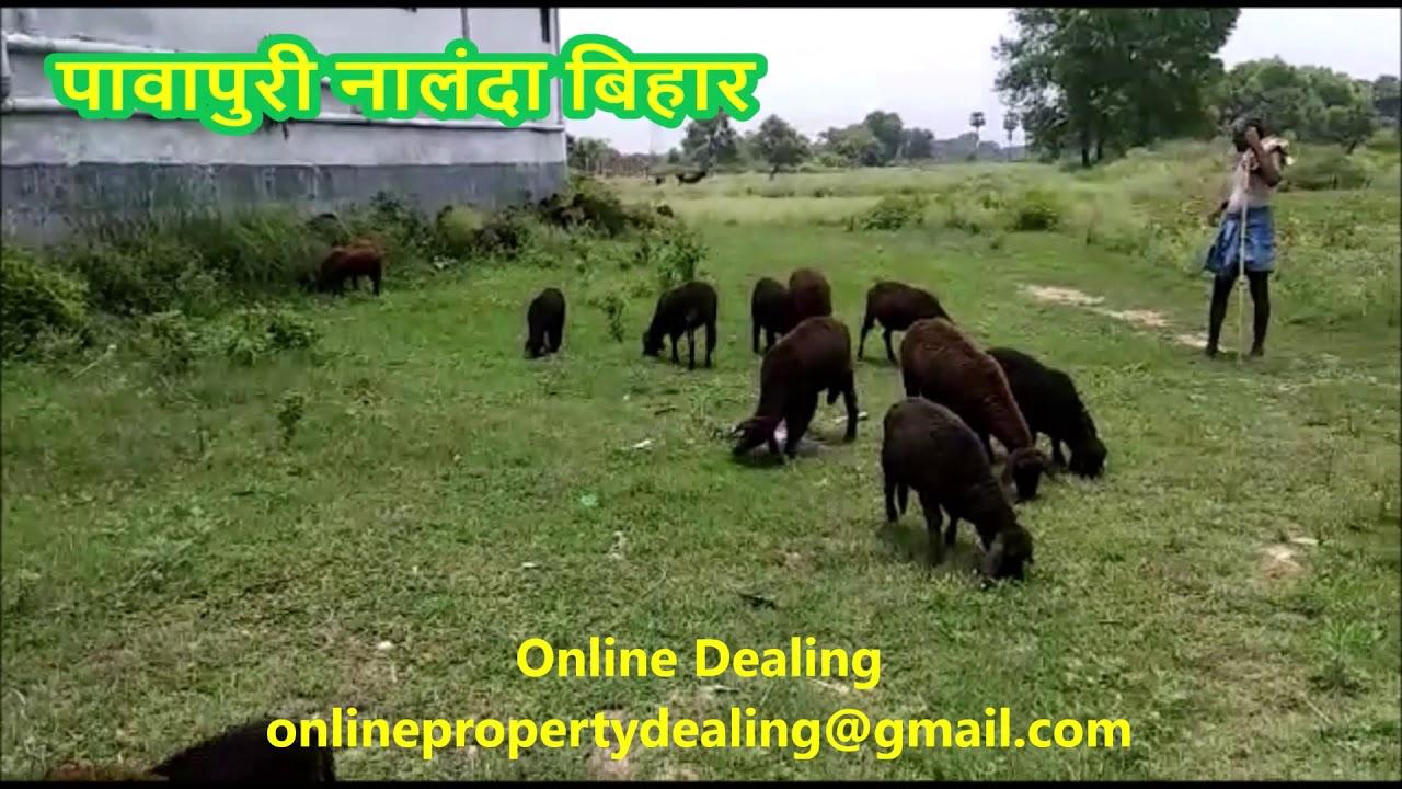 काली मिटटी मीठे पानी की जमीन नालंदा बिहार में बिकाऊ Call 7488724164 Pawapuri, Nalanda, Bihar