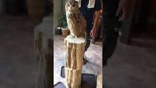 フクロウたちと触れ合えるお店ということで7月13日にテレビ関西にて放映...