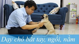Pugk vlog 8: Dạy chó bắt tay, ngồi, nằm tнeo lệnh