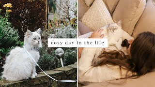 Cosy Day in the life ~ Taking Ragdoll Kitten for his first walk outside & a cosy day at home