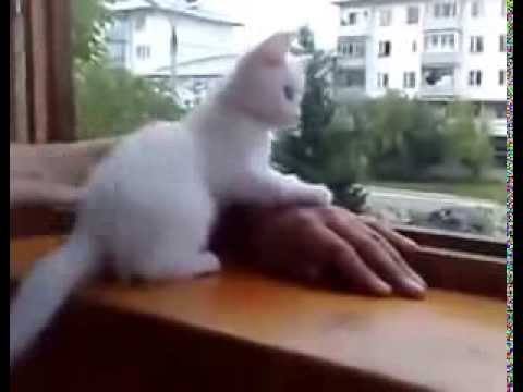 Smart cat save my hand from falling