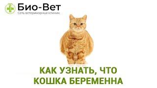 Топ-11 Признаков Беременности У Кошки & Как узнать, Что Кошка Беременна. Ветклиника Био-Вет
