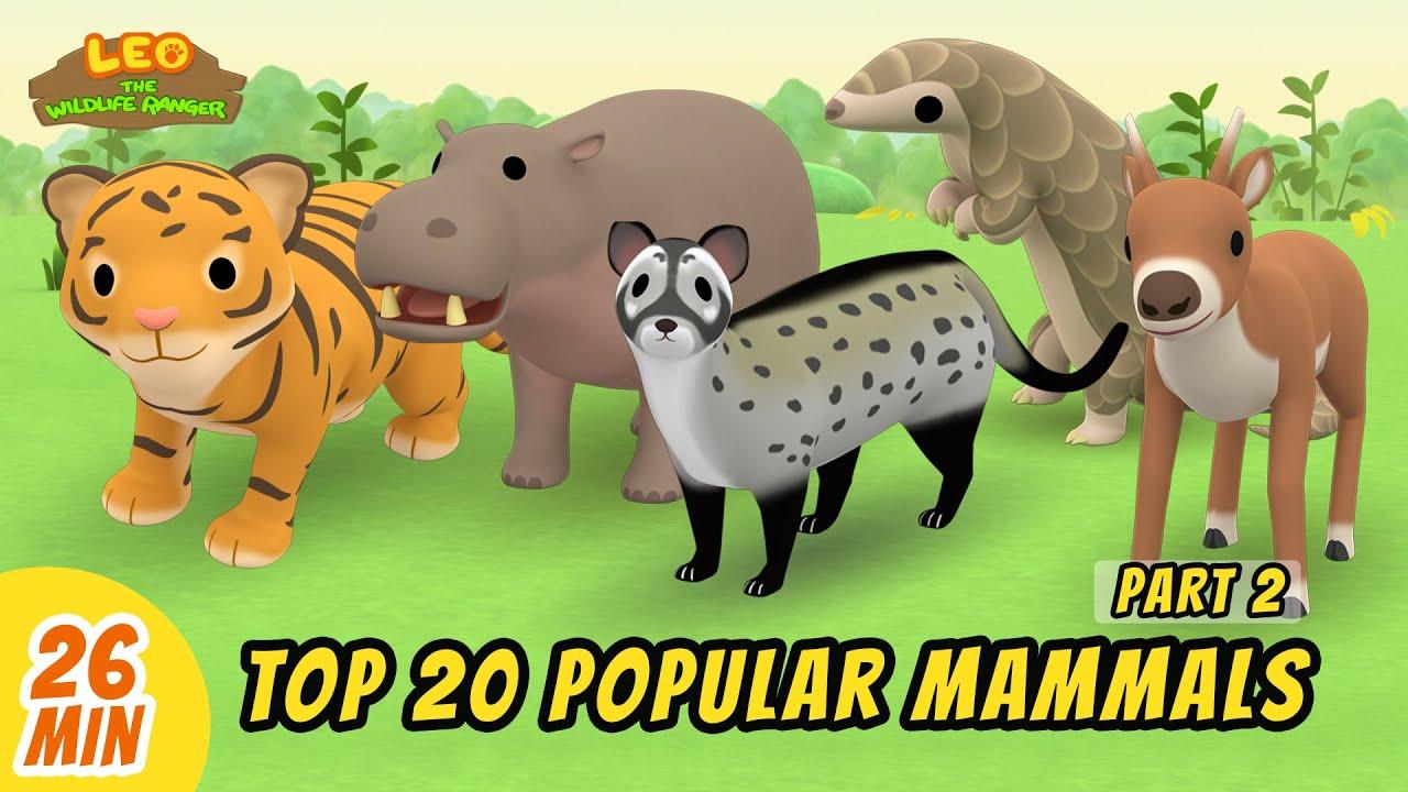 Top 20 Popular Mammals Minisode Compilation (Part 2/4) - Leo the Wildlife Ranger   Animation