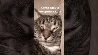 видео для