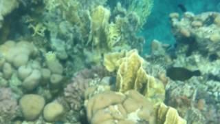 Голубой скат красное море Шарм-Эль-Шейх(подводное плавание, подводная фото охота, отдых в Египте Шарм Эль Шейх, фри дайвинг, free diving, подводная жизнь..., 2016-08-01T22:26:07.000Z)