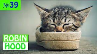 ПРИКОЛЫ 2017 с животными. Смешные Коты, Собаки, Попугаи // Funny Dogs Cats Compilation. Февраль №39