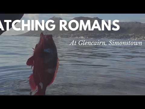 Fishing In Simonstown, Catching Red Romans And Hotties!