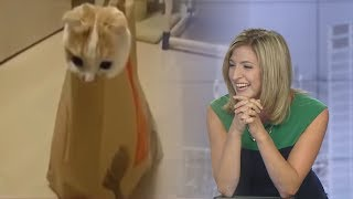 Laura can't stop laughing about this cat in McDonald's bag